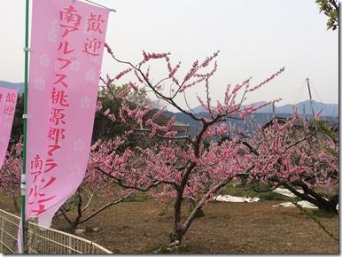 スタート地点桃の花
