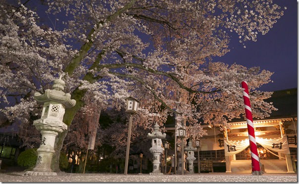 妙了寺夜桜sp_1020719