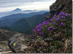 富士山とオヤマノエンドウ