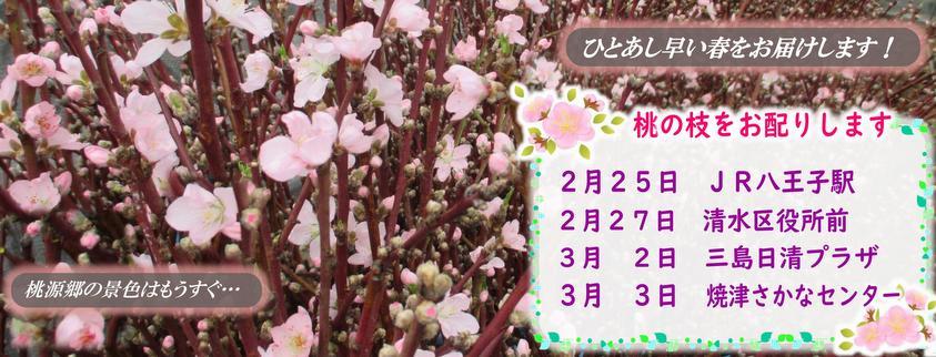 桃の枝配布