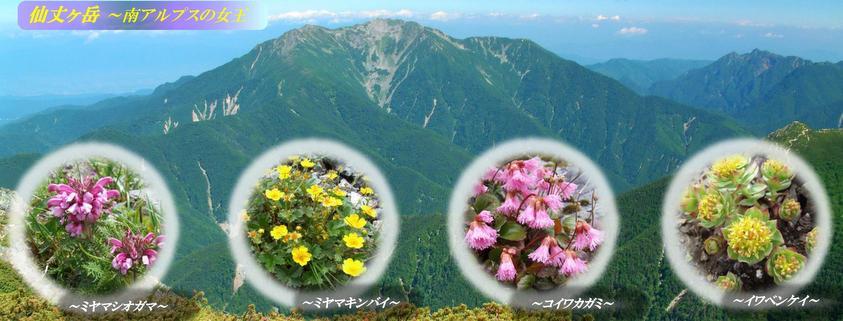 夏山の仙丈ケ岳