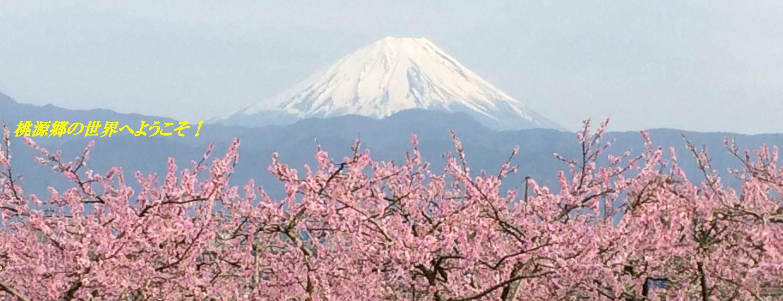 桃の花と富士山