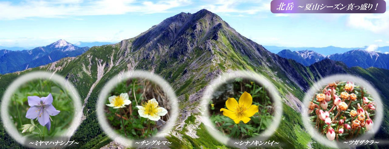 北岳とお花