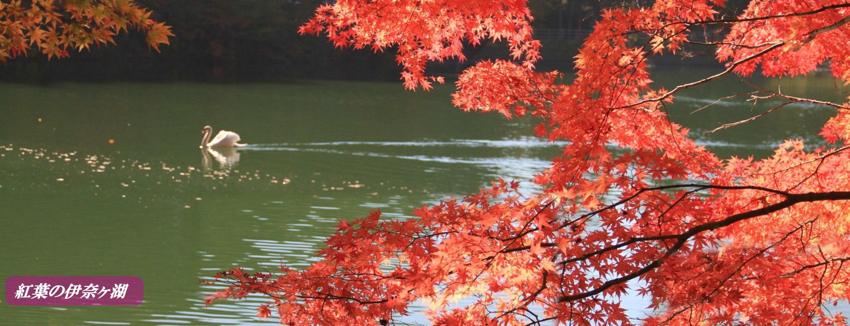 紅葉の伊奈ヶ湖